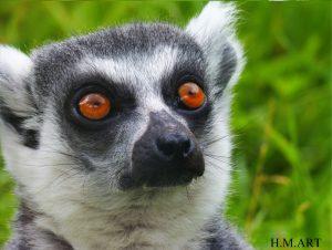 'Lemur' with incredibly vivid orange eyes.