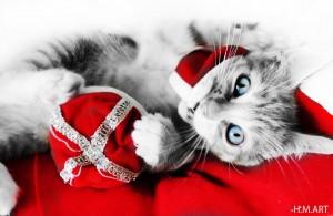 My beautiful kitten, Tigger