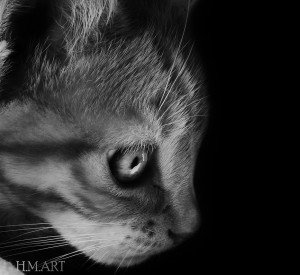 'Kitten Eyes' Animal Photography is one of my favourite!